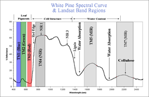 white pine spectral curve